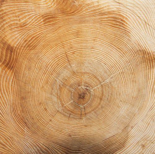 tree-73363_1920